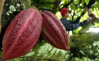 Dapat Bantuan Pompa, Petani Kakao Tidak Khawatir Kekeringan - JPNN.com