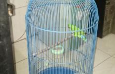 Tak Temukan Uang, Dua Burung Harga Belasan Jutaan Raib Digondol Maling - JPNN.com