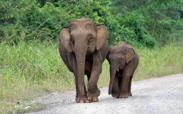 Biaya Pakan Rp 900 Juta Tapi Ada Gajah Kelaparan - JPNN.com