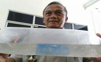 KKP Tertibkan Alat Tangkap Benih Lobster - JPNN.com