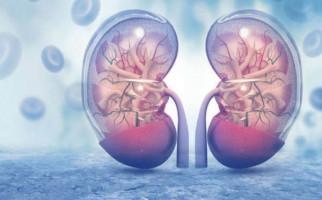 7 Kebiasaan ini Bisa Merusak Kesehatan Ginjal - JPNN.com