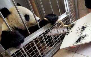 Terungkap, Ini Penyebab Kematian Panda Tiongkok di Kebun Binatang Thailand - JPNN.com
