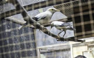 Berita Terbaru yang Penting Diketahui Para Pecinta Burung - JPNN.com