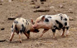 Shio yang Punya Peruntungan di Tahun Babi Tanah, Harus Rajin Sedekah - JPNN.com
