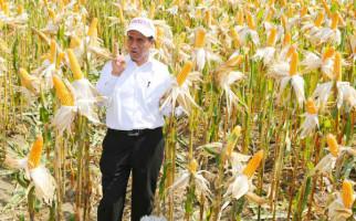 Kementan Fokus Kembangkan Kawasan Mandiri Benih Jagung - JPNN.com