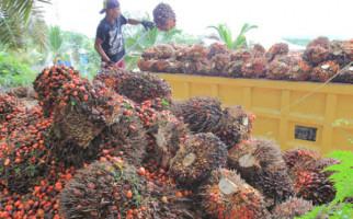 Strategi Terbaru Uni Eropa Jegal Ekspor CPO Indonesia - JPNN.com