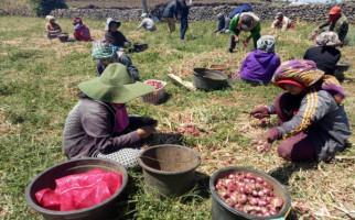 Warga Bima Tuntut Kementan Berpihak kepada Petani Bawang Merah - JPNN.com