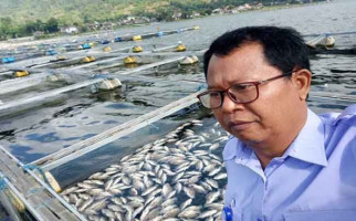 Akibat Semburan Belerang dari Danau, Ribuan Ikan Mati - JPNN.com