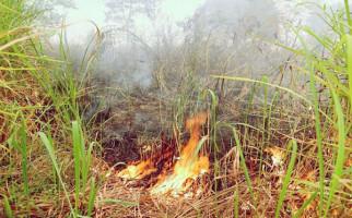 Kejaksaan Agung Menang Gugatan Kasus Kebakaran Hutan di Jambi - JPNN.com