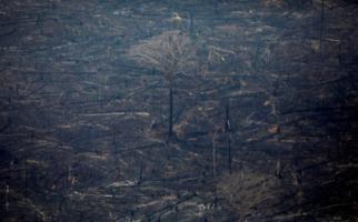 Menlu Brazil Anggap Kebakaran Hutan di Amazon Masih Normal - JPNN.com