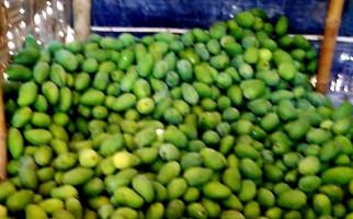 Kementan Mantapkan Kawasan Mangga Arummanis Rembang - JPNN.com