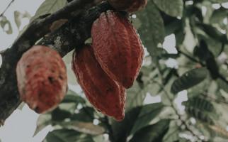 Sultra Tuan Rumah HPS 2019, Kementan Siapkan Kakao dan Sagu Jadi Komoditas Andalan - JPNN.com