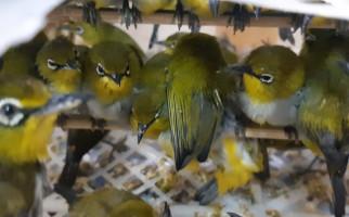 Petugas Karantina Cilegon Gagalkan Penyelundupan Ribuan Burung - JPNN.com