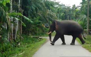 Coba Bayangkan! Tiba-Tiba Gajah Mengamuk di Dekat Anda, Merusak Pagar Masjid - JPNN.com