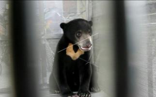 Beruang Madu Muncul Lagi di Kelok 44, Novrizal Pilih Menghindar karena Takut Diserang - JPNN.com