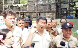 Lindungi Satwa Liar, Hasyim Dirikan Pusat Suaka Orang Utan - JPNN.com