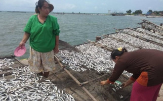 Setahun Pascatsunami, Ekonomi Nelayan Pandeglang Menggeliat - JPNN.com