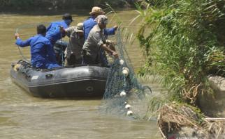 Detik-detik Menegangkan Mengejar Buaya Terlilit Ban - JPNN.com
