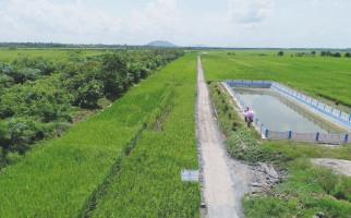 Kementan Bersama Kementerian Lain Kembangkan Food Estate di Kalteng - JPNN.com