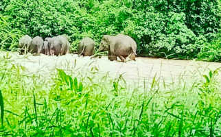Pantau Pergerakan Gajah Sumatera, KLHK Pasang Teknologi GPS - JPNN.com
