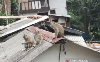 Sejumlah Balita Dicakar-cakar Monyet Liar - JPNN.com