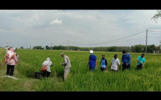 Program PSRLB Pertamina EP untuk Masyarakat Desa Berbuah Manis - JPNN.com