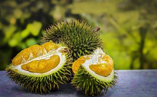Ibu Hamil Ingin Mengonsumsi Durian, Bolehkah? - JPNN.com