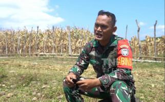 Prajurit TNI AD Ini Ubah Ladang Ganja Jadi Kebun Jagung - JPNN.com