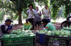 Bangga Bertani Mangga - JPNN.com
