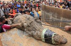 Buaya Raksasa, Panjangnya Lima Meter, Lihat nih Fotonya… - JPNN.com