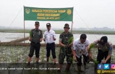 Panen Padi Lahan Tadah Hujan di Gunungkidul - JPNN.com