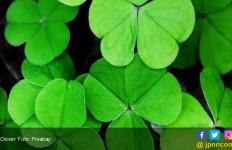 Catat! Ini Tanaman Herbal Untuk Melawan Kanker - JPNN.com