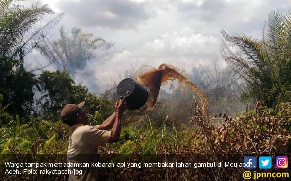 GeRAM Pertanyakan Putusan MA pada PT Kalista Alam Diabaikan - JPNN.com