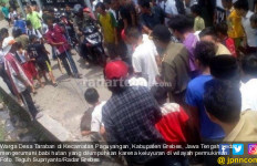 Hiii... Babi Hutan Mulai Keluyuran di Permukiman Warga - JPNN.com