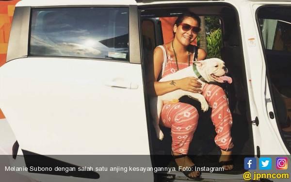 Melanie Subono: Pitbull Saya Lebih Galak tapi Manis - JPNN.com