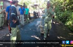 Digigit Anjing, Ibu dan Anaknya Meninggal Dunia - JPNN.com