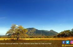 TN Baluran Kini Pantau Satwa Langka dengan GPS - JPNN.com