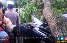 Pohon Tumbang di Medan Timpa 14 Mobil, 4 Motor dan 3 Betor - JPNN.com