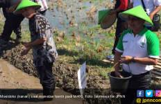 Dua Varietas Padi Keluaran HKTI Dapat Respons Positif Petani - JPNN.com
