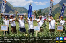 Pupuk Indonesia Genjot Semangat Petani Bawang Sembalun Lewat Demplot - JPNN.com