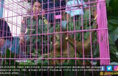 Thailand Kembalikan Orangutan Selundupan ke Indonesia - JPNN.com