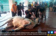Plastik Pembungkus Daging Kurban Istiqlal Telah Bersertifikat Halal - JPNN.com