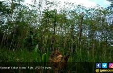 Kemenperin Kembangkan IKM Kelapa Terpadu dari Jambi Sampai Gorontalo - JPNN.com