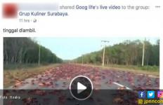 Kepiting Bermigrasi Digoreng jadi Hoaks Badai Irma - JPNN.com