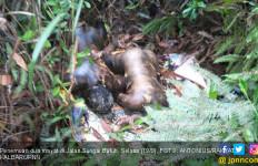 Mayat Pria dan Wanita di Semak-Semak Bikin Geger - JPNN.com