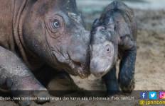 WWF: Populasi Satwa Dunia Menyusut 60 Persen, Ribuan Punah - JPNN.com