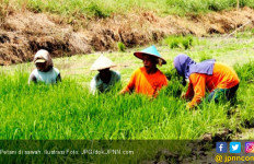 5 Masalah Pertanian dan Solusinya versi HKTI - JPNN.com