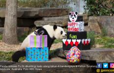 Tiongkok Usut Kematian Panda Chuang Chuang di Thailand - JPNN.com