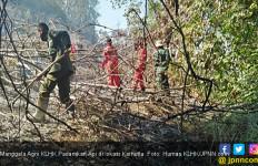 PSI Yakin Kebijakan Jokowi soal Hutan Pro Rakyat - JPNN.com