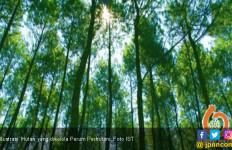 Perhutani Buka Kembali 38 Objek Wisata Alam, ini Daftarnya - JPNN.com